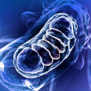 mitochondria w praktyce