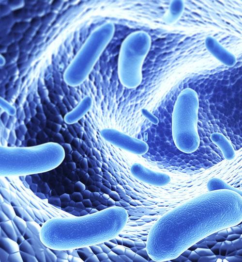 sibo przerost bakterii