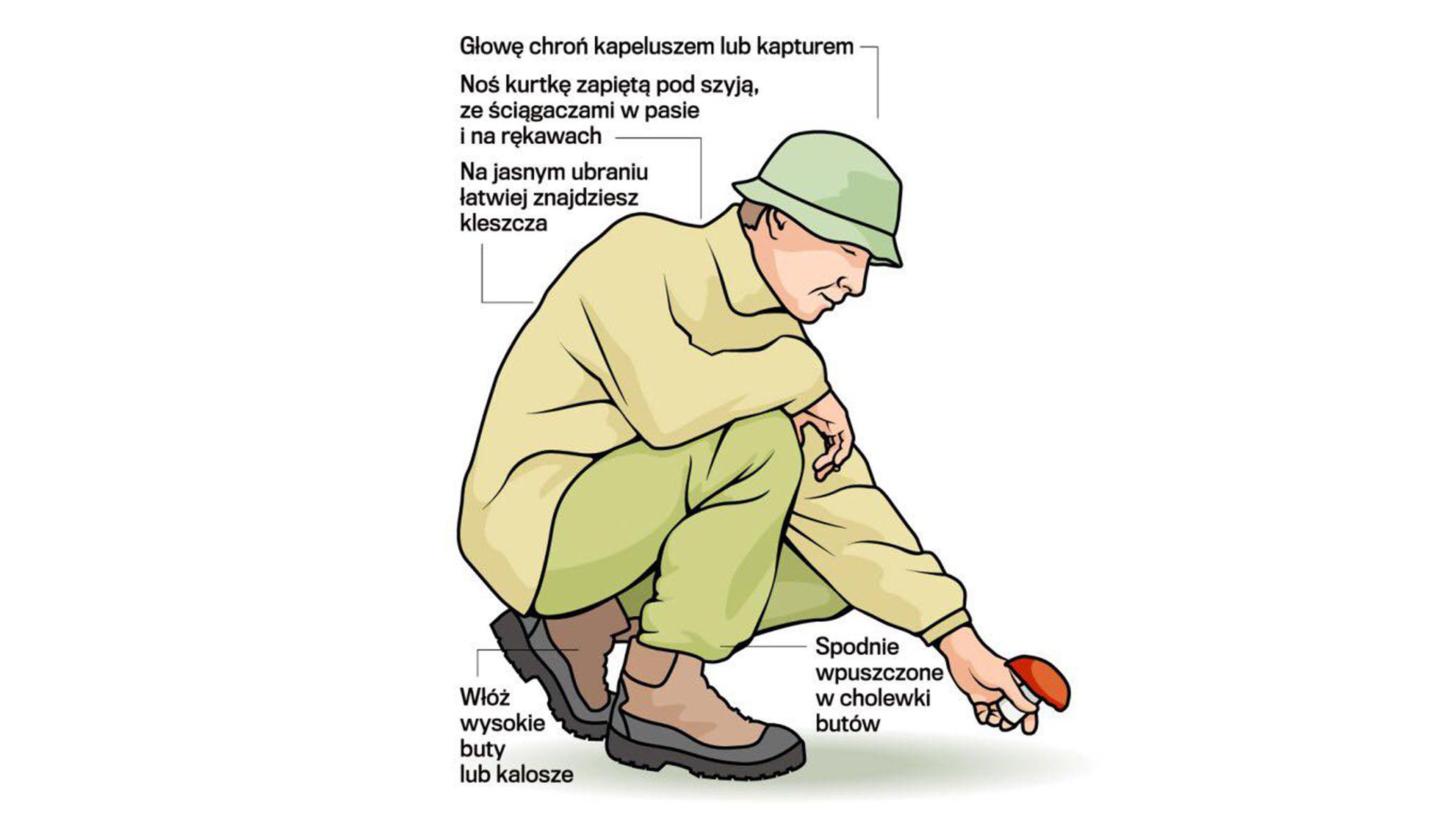 Grzybiarzu – bądź uważny – borelioza