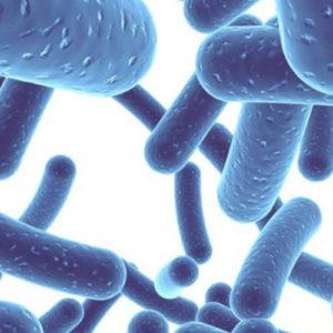 probiotykoterapia